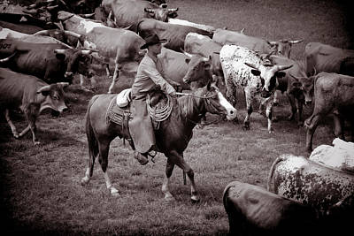 Cattle Drive Photograph - Keep Em Moving by Toni Hopper