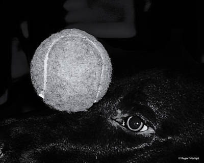 Chocolate Lab Photograph - Keep Your Eye On The Ball by Roger Wedegis