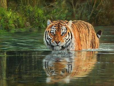 Bengal Tiger Painting - Keeping Cool by David Stribbling