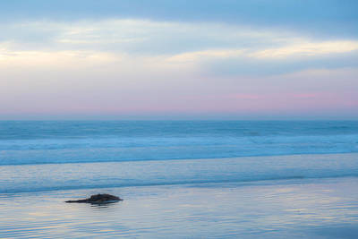 Beach Sunsets Photograph - Kelp by Peter Tellone