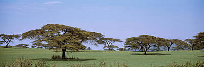 Pasture Scenes Photograph - Kenya, View Of Trees In Flat Grasslands by Panoramic Images