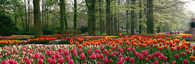 Multi Colored Photograph - Keukenhof Garden, Lisse, The Netherlands by Panoramic Images