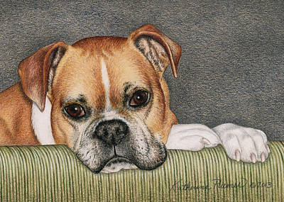 Boxer Drawing - Keyva by Katherine Plumer