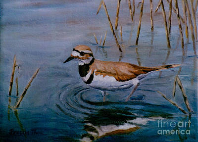 Killdeer Painting - Killdeer by Brenda Thour