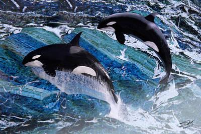 Wild Orca Whales Of Florida Print by Matthew Schwartz