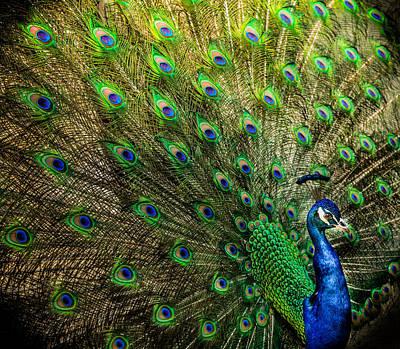 King Of Birds Print by Karen Wiles