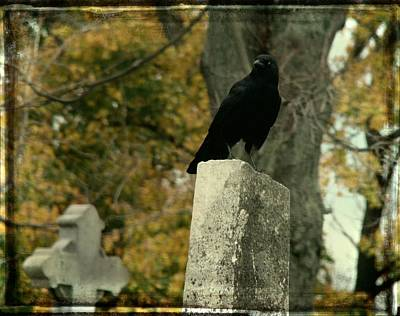 Birds In Graveyard Photograph - King Of The Graveyard by Gothicolors Donna Snyder