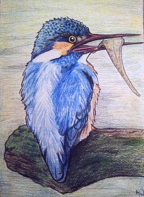 Kingfisher Drawing - Kingfisher by Andrea Walton