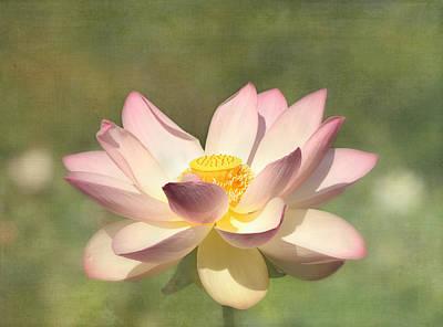 Kissed By The Sun - Lotus Flower Print by Kim Hojnacki