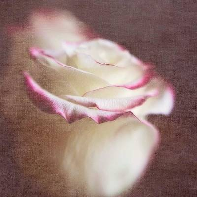 Roses Photograph - Kissed With Love #love #rose by Scott Pellegrin