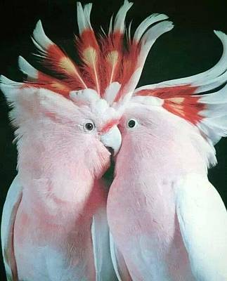 Lovebird Mixed Media - Kissycoo by Cindy Selvaggio
