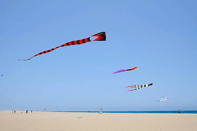 Soaring Photograph - Kites Over Cabo by Christine Till