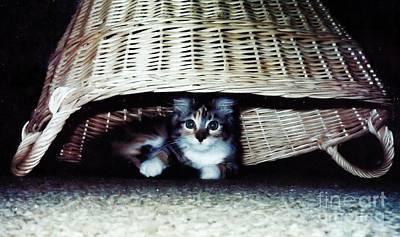 Hiding Photograph - Kitten In A Basket by Marsha Heiken