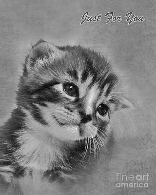 Gray Tabby Photograph - Kitten Just For You by Terri Waters
