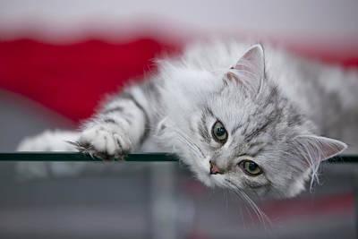 Green Eyes Photograph - Kitten by Melanie Viola