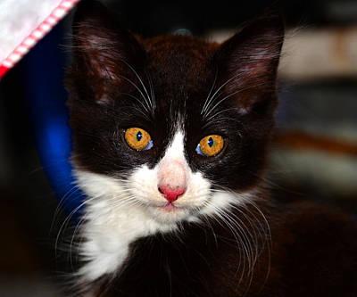 Animal Portraiture Photograph - Kitten Work Three by David Lee Thompson