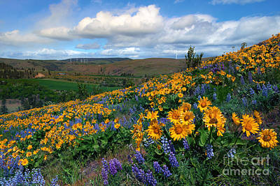 Kittitas Valley Color Explosion Print by Mike  Dawson
