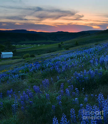 Kittitas Valley Sunset Print by Mike  Dawson