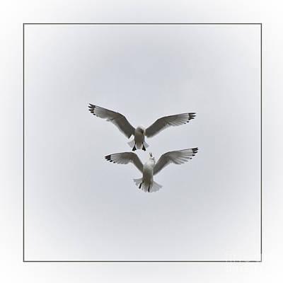 Kittiwakes Dancing In The Air Print by Heiko Koehrer-Wagner