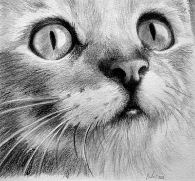 Portrait Drawing - Kitty Cat by Eleonora Perlic