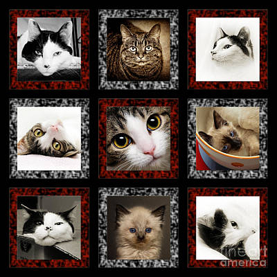 Andee Fine Art And Digital Design Photograph - Kitty Cat Tic Tac Toe by Andee Design