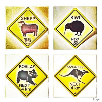 Kiwi Aussi Road Signs Print by HELGE Art Gallery