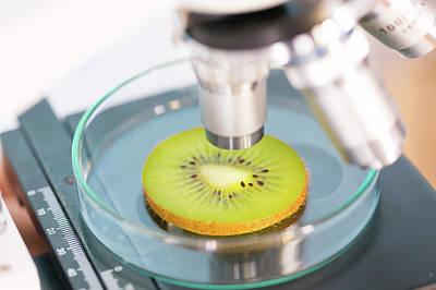 Kiwi Fruit Being Examined Print by Wladimir Bulgar