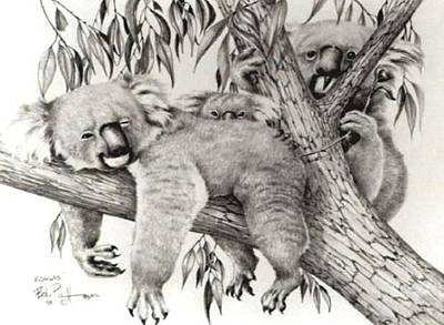 Koala Drawing - Koala Family by Bob Patterson