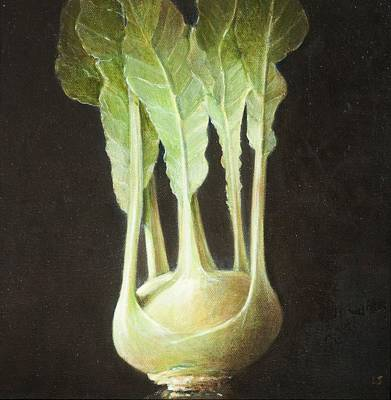 Cabbage Photograph - Kohl Rabi, 2012 Acrylic On Canvas by Lincoln Seligman