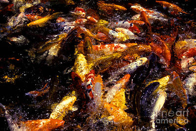 Koi By The Dozen Print by Paul W Faust -  Impressions of Light