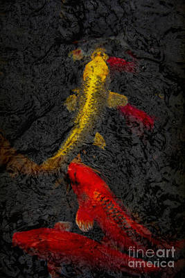 A Lot Photograph - Koi by Margie Hurwich