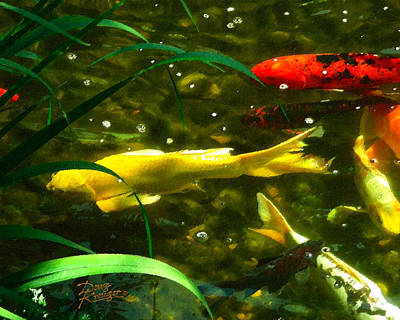 Koi Digital Art - Koi Pond II by Doug Kreuger