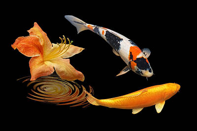 Koi Fish Photograph - Koi With Azalea Ripples by Gill Billington