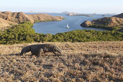 Indonesian Wildlife Photograph - Komodo National Park by M. Watson
