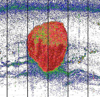 Krill Ball Print by Sophie Fielding/pete Bucktrout, British Antarctic Survey