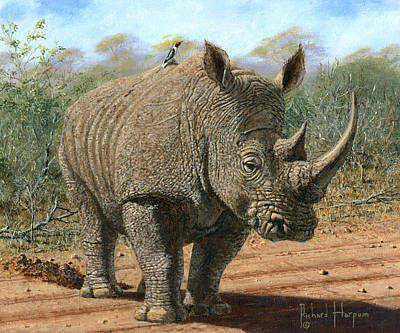 Oil For Sale Painting - Kruger White Rhino by Richard Harpum