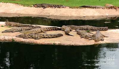 La Bonheur Crocodiles Print by Lisa Byrne