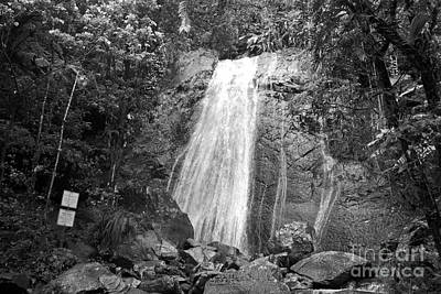 La Coca Falls El Yunque National Rainforest Puerto Rico Print Black And White Print by Shawn O'Brien