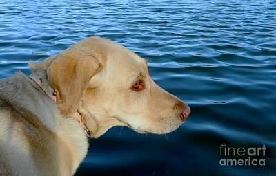 Retrievers Digital Art - Lab And Water by Michelle Frizzell-Thompson