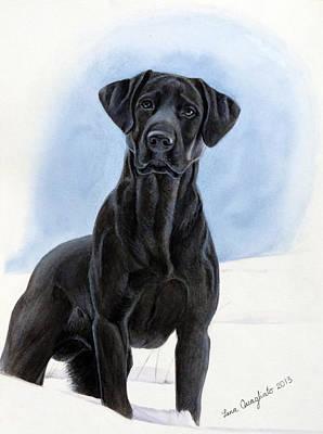 Black Lab Watercolor Painting - Labrador by Lena Quagliato