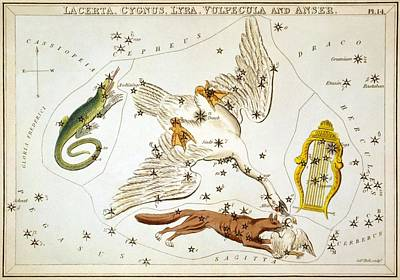 Zodiac Painting - Lacerta Cygnus Lyra Vulpecula And Anser by Celestial Images