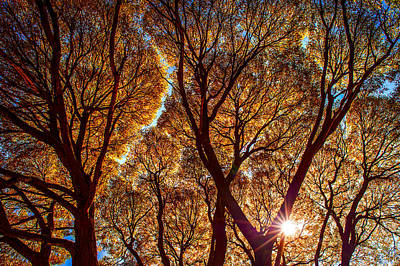 Of Autumn Photograph - Lacy Willows In Autumn Glory by Jenny Rainbow