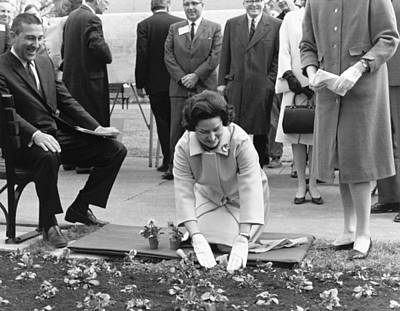 President And First Lady Photograph - Lady Bird Johnson Planting by Underwood Archives