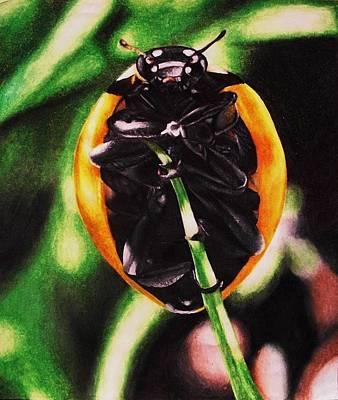 Ladybug Drawing - Lady Bug by Moriah Roberts