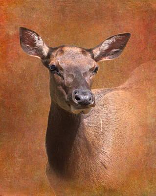 Lady Elk Print by Angie Vogel