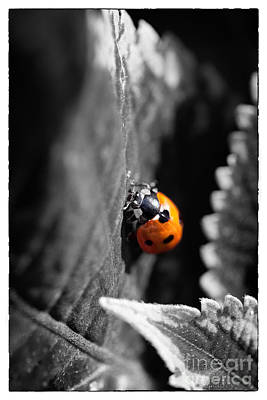 Ladybug Digital Art - Ladybird by Natalie Kinnear