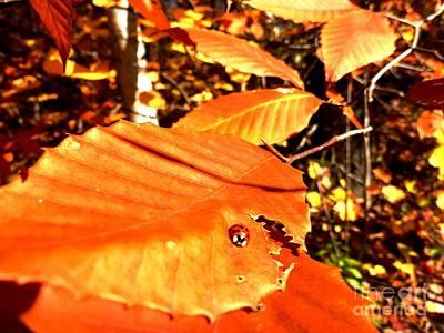 Ladybug At Fall Print by Cristina Stefan