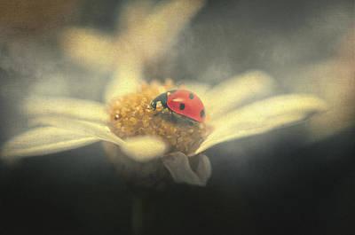 Flowers Photograph - Ladybug Dream by Taylan Soyturk