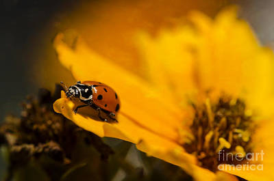 Ladybug Print by Nicole Markmann Nelson
