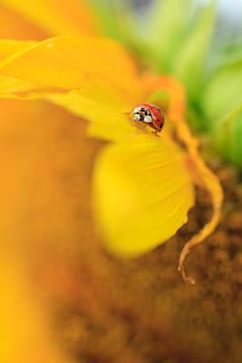 Ladybug Print by Rebecca Skinner